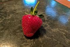 flower strawberry